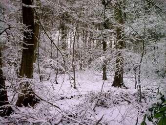 Frosty trees landscape